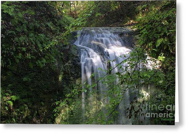 Greeting Card featuring the photograph Florida Falls by Dodie Ulery