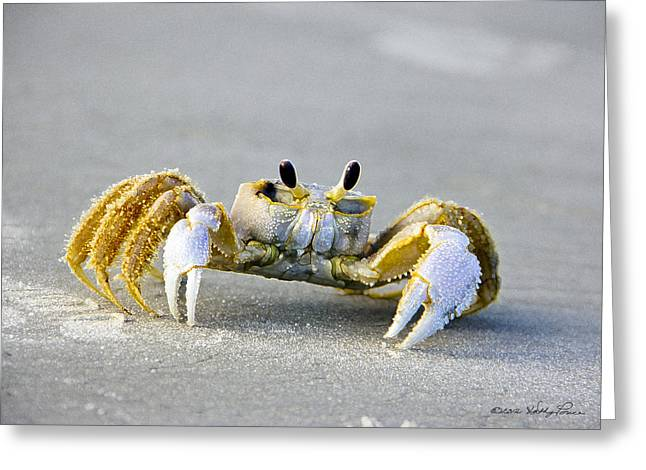 Florida Ghost Crab Greeting Card