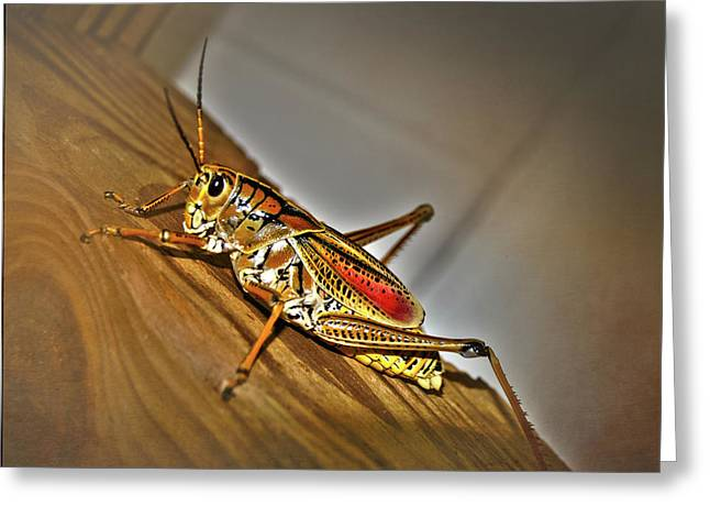 Florida Grasshopper Greeting Card by Judy Hall-Folde