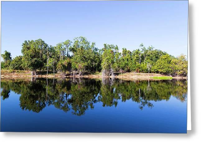 Florida Lake And Trees Greeting Card