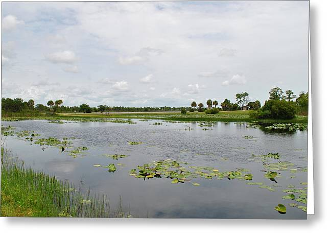 Florida Landscape Greeting Card by Steven Scott