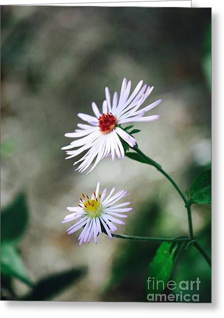 Florida Nature - Wildflowers Greeting Card by Carol Groenen