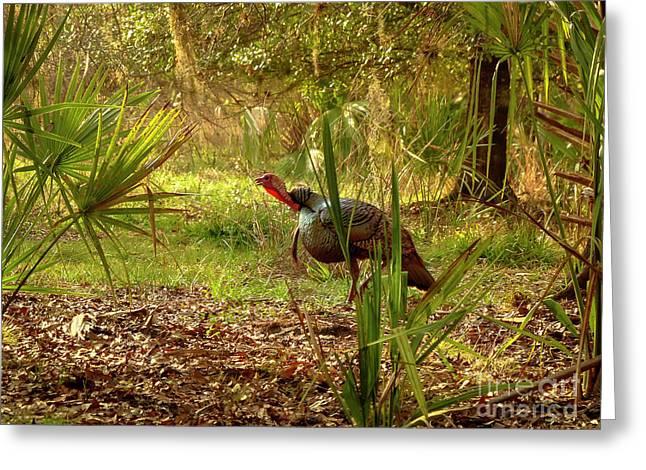 Florida Osceola Turkey #4 Greeting Card by Teresa A and Preston S Cole Photography