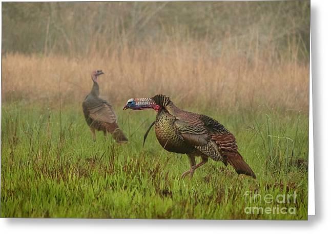 Florida Osceola Turkeys #2 Greeting Card by Teresa A and Preston S Cole Photography