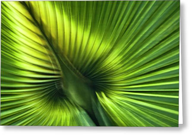 Florida Palm Frond Greeting Card by Carolyn Marshall