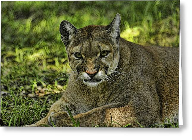 Florida Panther Agitated Greeting Card by Keith Lovejoy