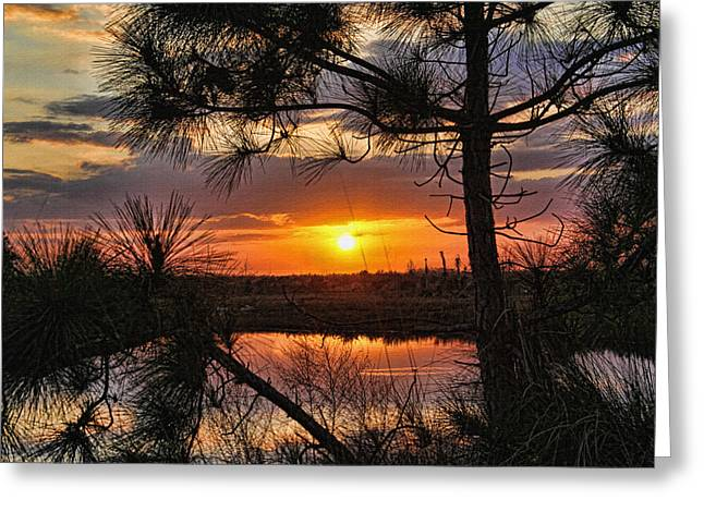 Florida Pine Sunset Greeting Card