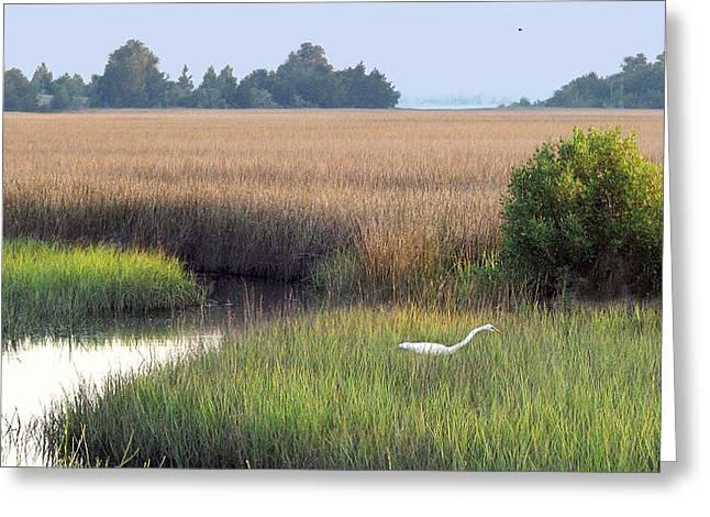 Greeting Card featuring the photograph Florida Saltmarsh by Peg Urban