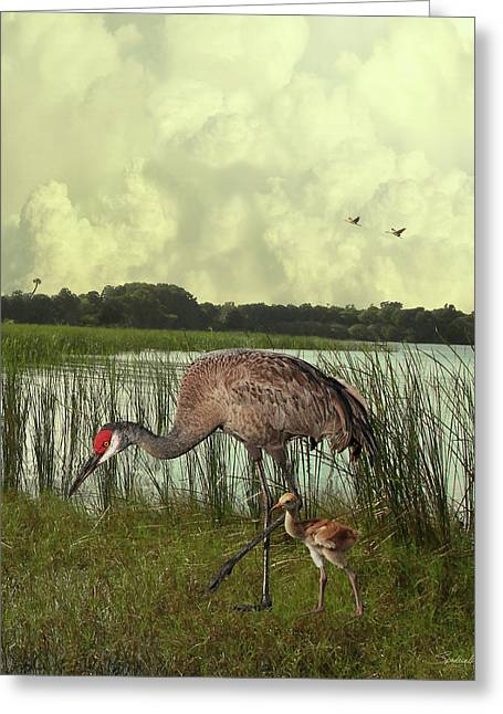 Florida Sandhill Crane With Baby Greeting Card