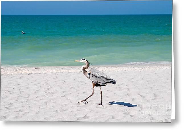 Florida Sanibel Island Summer Vacation Beach Wildlife Greeting Card by ELITE IMAGE photography By Chad McDermott