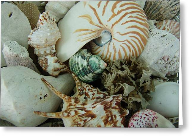 Florida Sea Shells Greeting Card