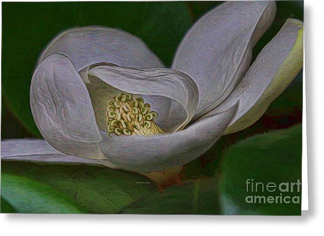 Florida Springtime Magnolia Greeting Card by Deborah Benoit