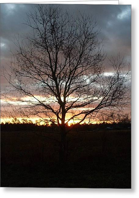Florida Sunrise And Tree Greeting Card by Warren Thompson