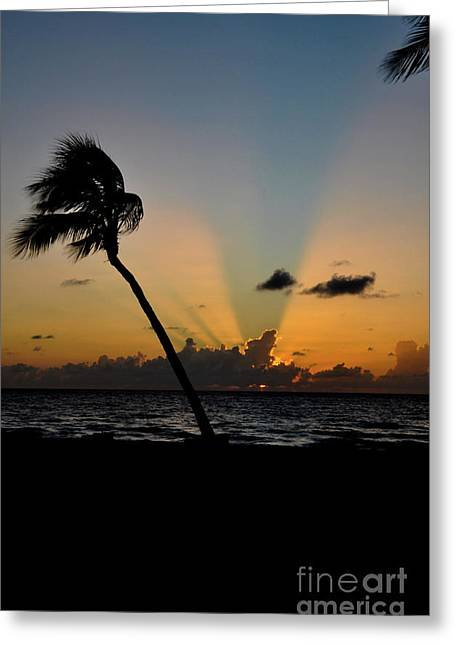 Greeting Card featuring the photograph Florida Sunrise Palm by Kelly Wade
