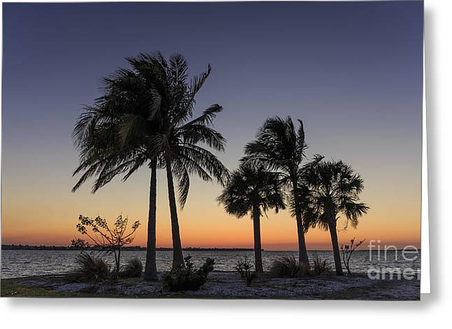 Florida Sunset Greeting Card by Edward Fielding