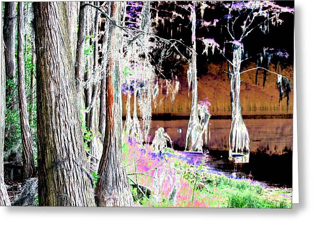Florida Swamp Greeting Card by Peter  McIntosh
