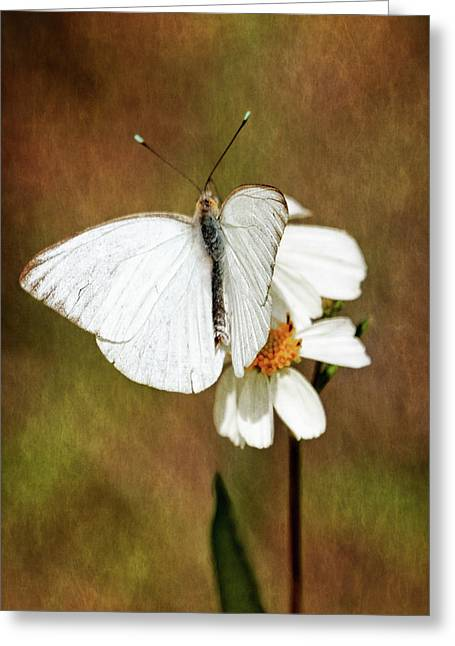 Florida White Greeting Card by Dawn Currie