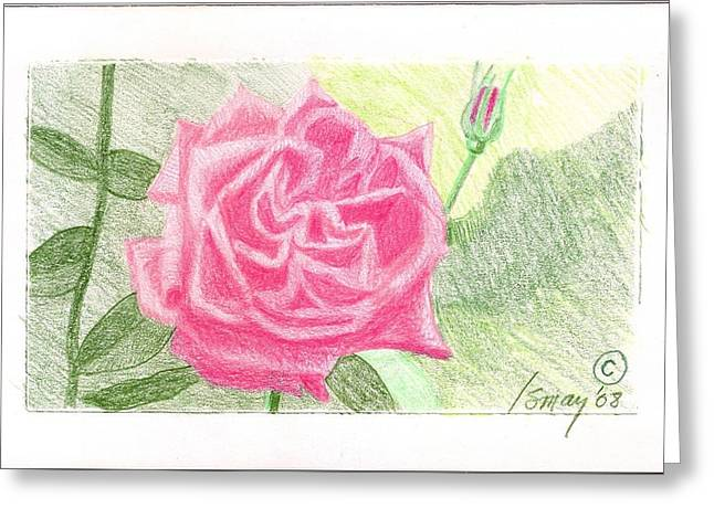 Flower 2 - The Confused Rose Greeting Card by Rod Ismay