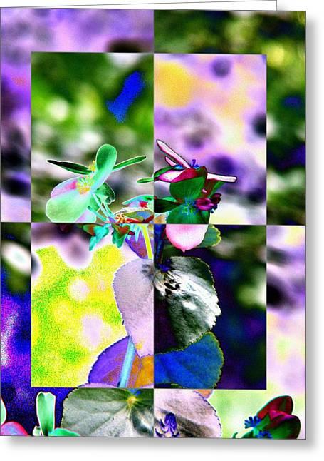 Flower 2 Greeting Card by Tim Allen