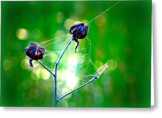 Greeting Card featuring the photograph Flower 3 Spiderweb  by David Mckinney