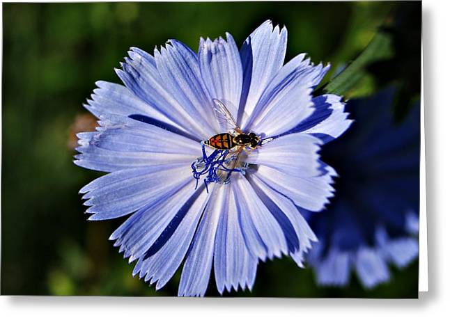Flower And Bee 2 Greeting Card by Joe Faherty