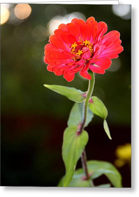 Greeting Card featuring the photograph Flower And Hope by Vadim Levin
