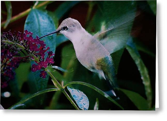 Flower And Hummingbird Greeting Card