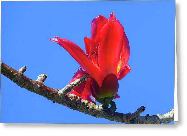 Flower And Sky Worship Greeting Card