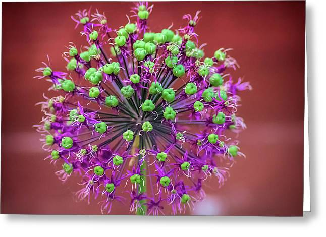 Flower Ball Greeting Card by Martin Newman