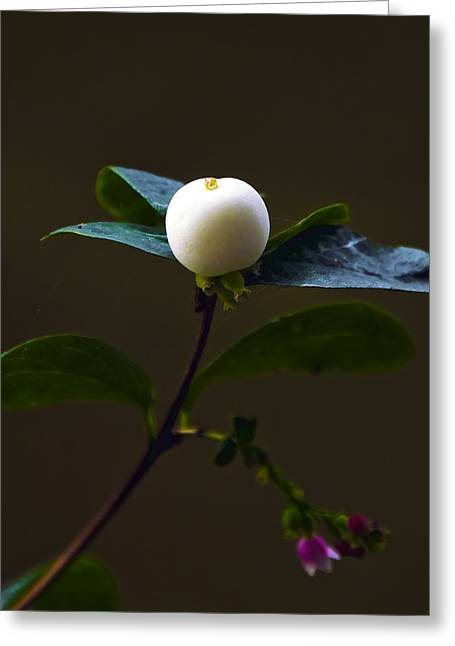 Flower Ball Greeting Card by Svetlana Sewell