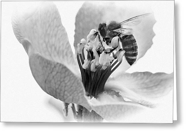 Greeting Card featuring the photograph Flower Bee by Cliff Norton