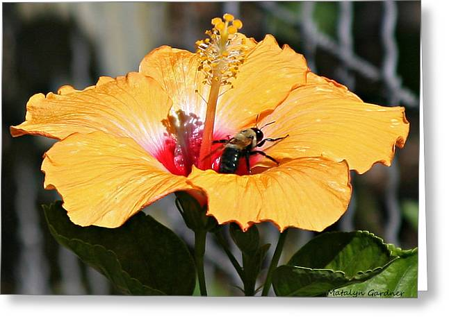 Flower Bee Greeting Card