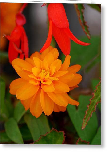 Greeting Card featuring the photograph Flower by Bernd Hau