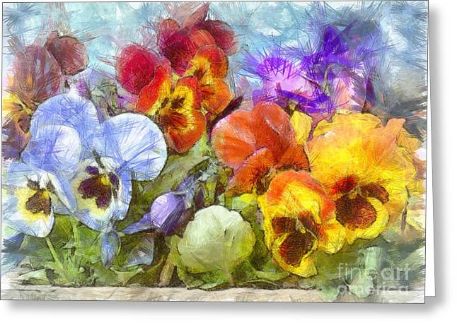 Flower Box Full Of Pansy Pencil Greeting Card