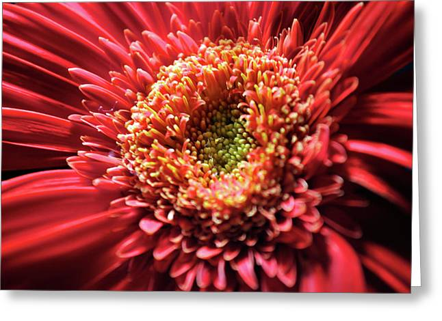 Flower Burst Greeting Card by Sheryl Thomas