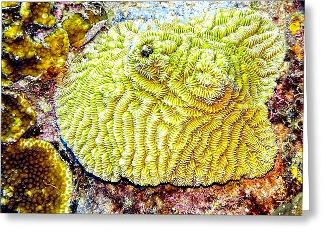 Greeting Card featuring the photograph Flower Coral by Perla Copernik