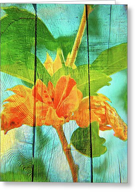 Flower Cup, Hibiscus Greeting Card