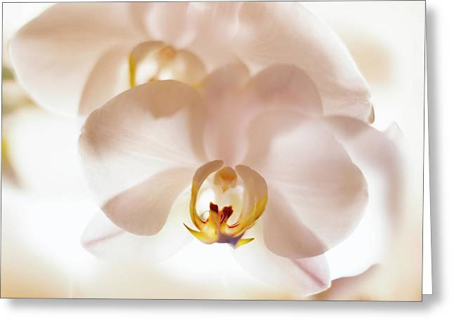 Flowers Delight- Greeting Card