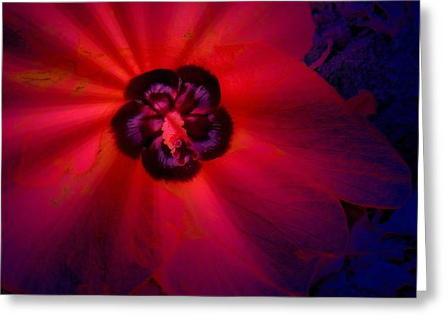 Flower Fantasy Greeting Card by Lori Seaman