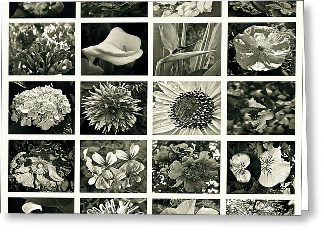 Flower Favorites Bw Greeting Card by Gwyn Newcombe