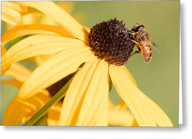 Flower Fly Greeting Card
