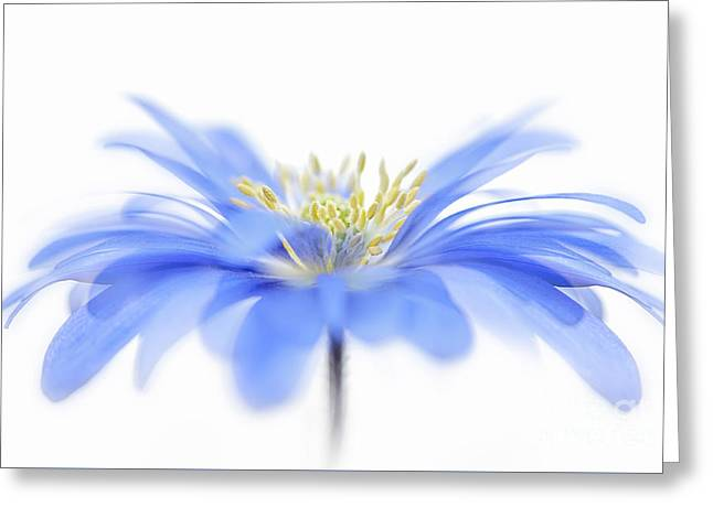 Flower Fountain Greeting Card by Jacky Parker