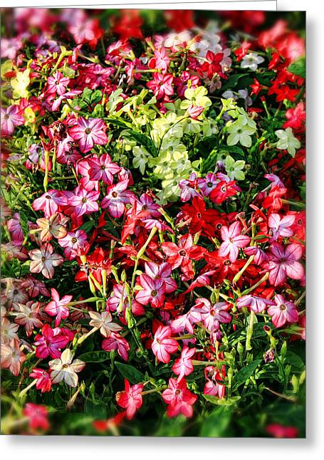 Flower Garden 1 Greeting Card