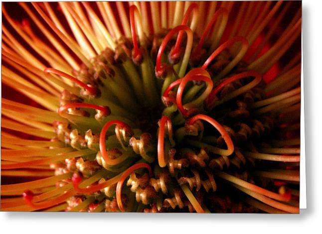 Greeting Card featuring the photograph Flower Hawaiian Protea by Nancy Griswold