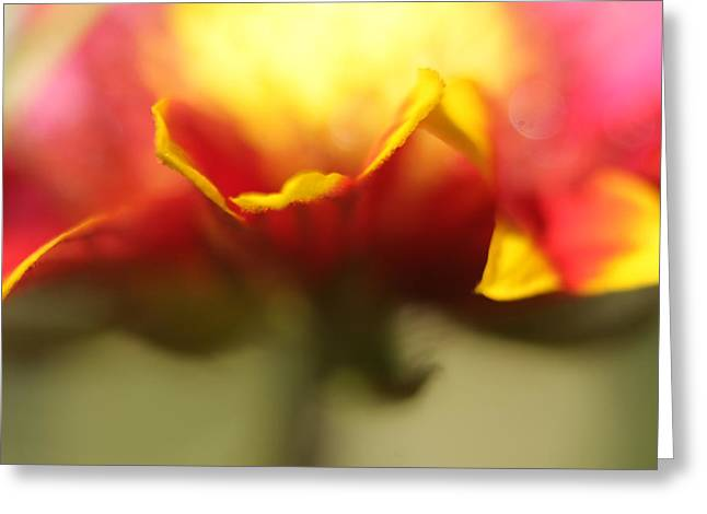 Flower Impressions II Greeting Card