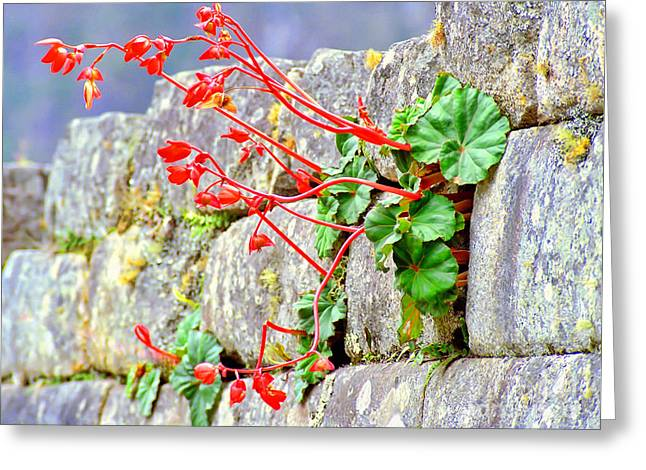 Greeting Card featuring the photograph Flower In An Inca Wall by Nigel Fletcher-Jones