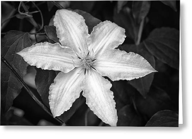 Flower In Black And White Greeting Card