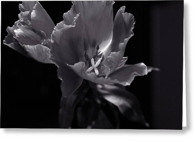 Flower In Monotone Greeting Card by Sheryl Thomas