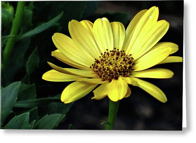 Flower In Yellow Greeting Card by Mikki Cucuzzo