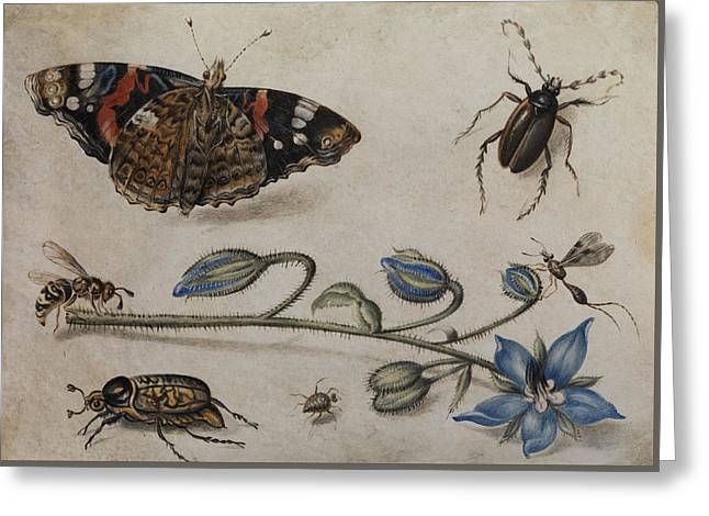 Flower, Insects And Butterfly Greeting Card